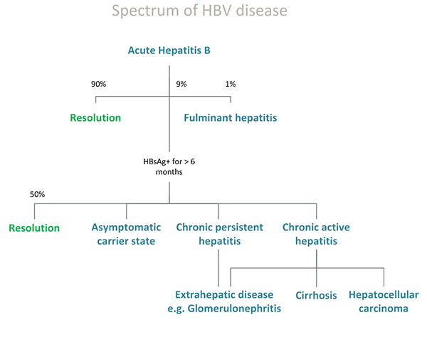 Diagram showing the spectrum of HBV disease